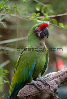 Green Parrot Sitting on Wood