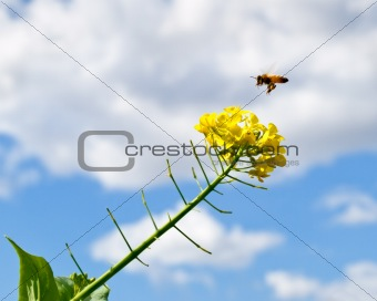 Spring with blue sky rain clouds and bee