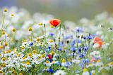 abundance of blooming wild flowers on the meadow at spring time