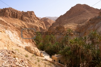 An oasis in the mountainous part of the Sahara