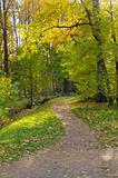 Autumn landscape. Russia