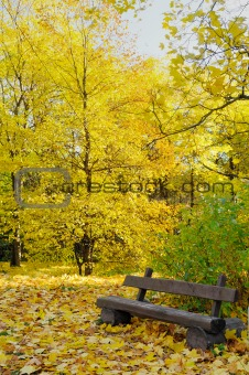 Autumn landscape. Bench in the park