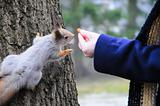 squirrel being hand fed