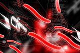 Helicobacter bacteria