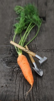 Carrot with garden tools