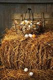 Basket of freshly laid  eggs lying on straw