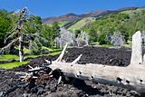 hardened lava flow on green slope of Etna, Sicily