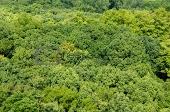 Forest canopy as seen from above
