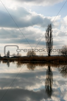 tree reflections on the water