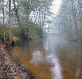 Autumn fog 1