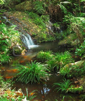 water spring in jungle