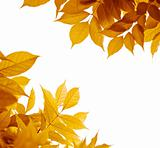 autumn leaves over white