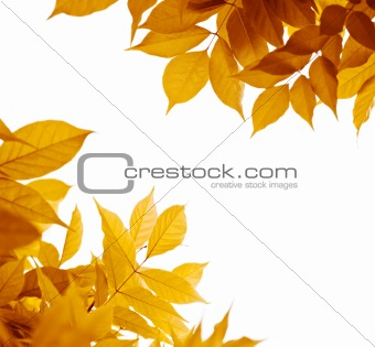 autumn leaves over white