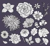 Set of flowers. Floral elements.