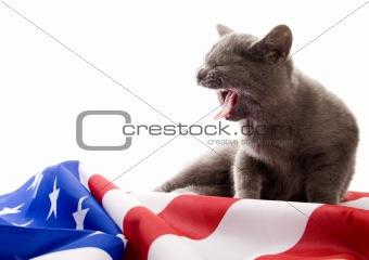 Cat on flag
