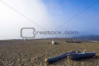 Cambria Fog Bank