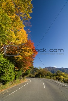 Japanese Country Road