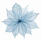 Skeleton Leaves Flower