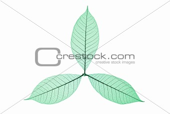 Skeleton Leaves Flower