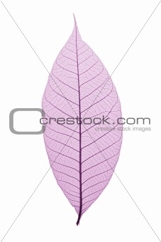 Skeleton Leaf
