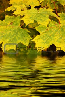 Autumn leaves reflected in water