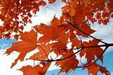 Sky Through Leaves