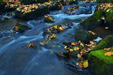 Autumn - 13