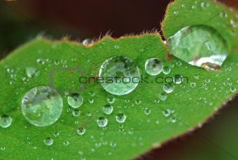 green leaf and water droplets in the gardens