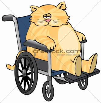 Cat In A Wheelchair