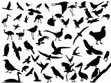 Vector of isolated birds