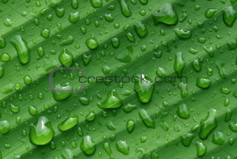 green leaf and water droplet in the gardens