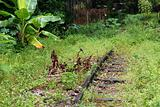 deserted railway track and plant in the urban