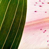 Organic Close up
