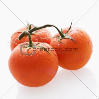 Tomato still life.