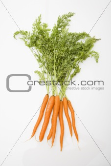 Carrots on white background.