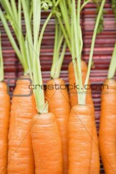 Carrot close up.