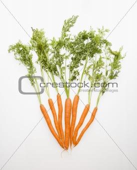 Carrot vegetables.