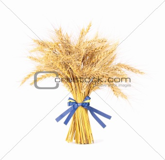 Wheat with bow
