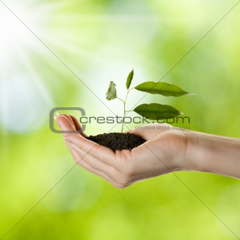 Woman's hand with young plant
