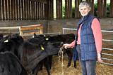 Farmer Feeding Cattle In Barn