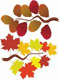 fall elm and maple leaves