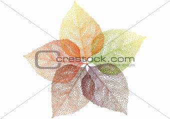 autumn leaves, vector