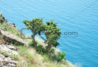 Hill and sea(4).jpg