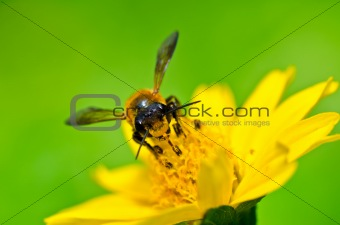 bee in green nature