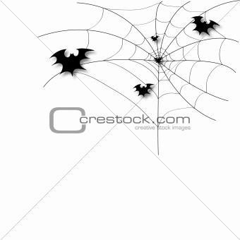 Bat on a spider web