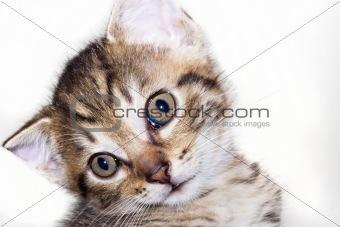 kitten - amazed look