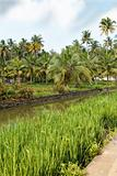 portrait landscape of canal palms paddy fields Ke