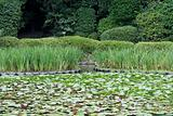 Water lilies in a traditional japanese garden