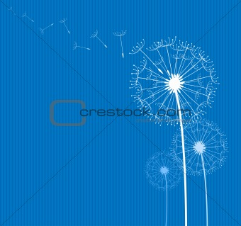 dandelion on blue