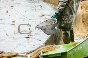 harvesting pond